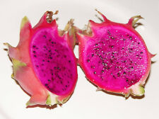 New listing 2 Purple Dragon Fruit tree,-plant With 9 Inch Cutting