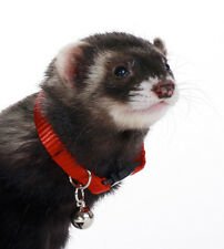 MARSHALL PET FERRET COLLAR WITH BELL RED JINGLE. TO USA