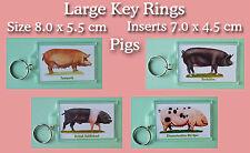 Rectangle Acrylic Animal Collectable Keyrings