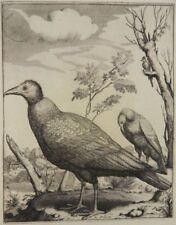 PELIKAN VOGEL RADIERUNG GERARD VALCK 1690 PELICAN BIRD ETCHING J90