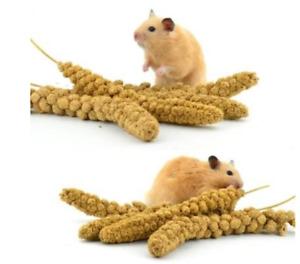 *Small Animal Hamster Millet Sprays Sprigs (5 x Sprays of Millet)…