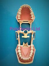 Frasaco AG3 Fit Dental Restorative Typodont Teeth Frasaco Articulated Jaw