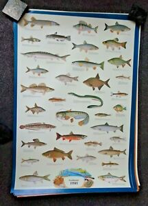 LARGE FRESHWATER FISH POSTER - EDUCATIONAL - 98 x 68 CMS