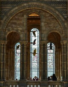 A3 Photo Print: Natural History Museum in South Kensington, London