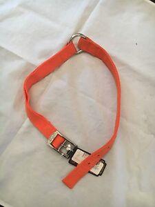 "Team RealTree NEW 1"" x 18"" Hunter Orange Chrome Plated Dog Collar . NWT Pet Neon"