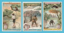 LIEBIG - SET OF 6 CARDS -  S 918  /  F 917  -  HUNTING ANIMALS FOR FURS  -  1908