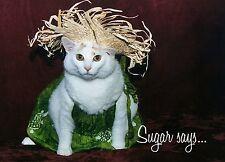 Sugar Says Fat Cat Feline Model, Inspirational Birthday Greeting Card Sundress