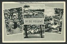 Op de Veluwe