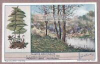 Leatherleaf Fern Fougere Male Plant Medical Drug Herb 60+ Y/O Trade Ad Card