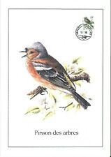 FDC 2351 - Oiseau Buzin sur gravure format A4 !