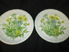 ENOCH WEDGWOOD  PAIR OF DINNER PLATES IN BUTTERFIELD  TUNSTALL BRITISH IRONSTONE