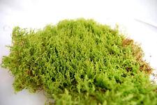 Live carpet moss for terrarium,vivarium,frogs, orchids,reptiles or miniature