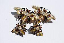 FANTASTIC BUMBLE BEE CORO ENAMELED DUETTE PIN BROOCH Screw Back Earrings VINTAGE
