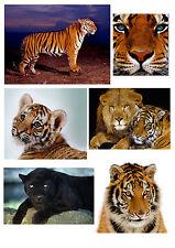 6 ADESIVI TIGRE PANTERA NERA WINDOW STICKERS FINESTRA TIGER VETRI LEONE LIONS