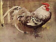 Spangled Cock chickens farming 1930s vintage print  in 12 x 10 inch mount SUPERB