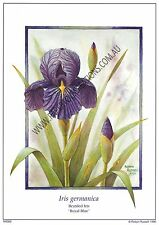 Paper tole kit -Bearded Iris