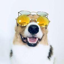 Dog Glasses Cat Glasses Fashion Eye-wear Sunglasses For Cats Small Large Glasses