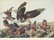 "1972 Vintage HUNTING ""VIRGINIAN PARTRIDGE & HAWK ATTACK, 1830"" Color Lithograph"