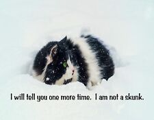 METAL FRIDGE MAGNET Cat Tell You One More Time I Am Not Skunk Humor Cats