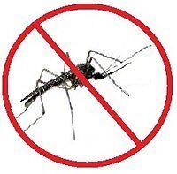 Pack de Semillas para Plantas Anti-mosquitos seeds