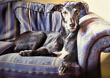 Black Greyhound Lurcher Whippet Blank Greeting Card or frame as a print