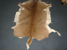 WHITETAIL DEER HIDE, nice, tanned, antlers, hides, skulls, small animals