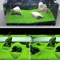 Aquarium Plants Seeds Glossostigma Hemianthus Callitrichoides Water Aquatic Fish