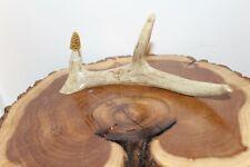 Custom Carved Morel Mushroom on a Whitetail Antler Main Beam Shed Antler Top