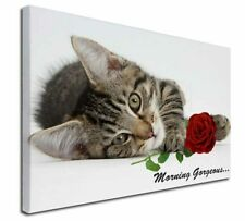 More details for kitten with rose 'morning gorgeous'... x-large 30