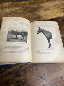 Antique 1906 Book Horse HORSES, SADDLES and BRIDLES by Gen. W.H. Carter 1895