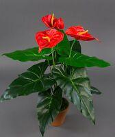 Anthurie Real Touch 50cm rot im Topf ZJ Kunstblume künstliche Blume Kunstpflanze