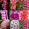 100Pcs Fragrant Orchid Seeds Cymbidium Flower Home Garden Rare Bonsai Plant Easy