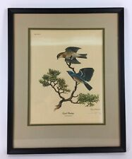 Ray Harm Signed Bird Print Lazuli Bunting Framed Matte 21X17 Realism Art Picture