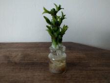 Dolls House Glass Vase Pot Plant