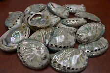 "10 PCS POLISHED GREEN ABALONE SEA SHELL CRAFT 2"" - 3"" #7117G"