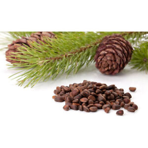 Cedar Nuts Natural Parrot Treat - 100g