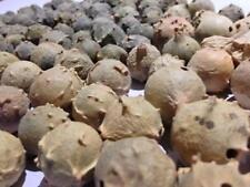 5Kg Majuphal Manjakani Quercus Infectoria Nutgalls Gallnuts Oakgalls Majuphal Ma