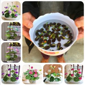 100 pcs Lotus seeds Water Lily Bonsai Seed Garden Multiple Color Bowl Aquatic