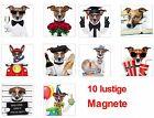 10-er Set Lustige Kühlschrankmagnete, Magnete für Kinder 52 x 52 mm Jack Russell