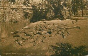 Amusement Alligator Farm East Lake C-1910 Los Angles California Mitchell 11917