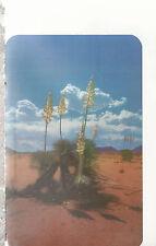 Desert Yucca or Spanish Bayonet in Bloom  Red Desert Sands  Chrome Postcard 317