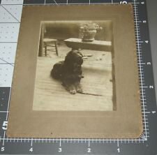 """New Listing""""King"""" English Springer Spaniel Dog Breed Read Back Antique Cabinet Card Photo"""