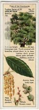 Evergreen Holly Oak Tree Quercus ilex 1930s Trade Ad Card
