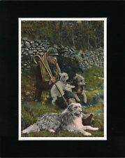 SHEPHERD WITH BEARDED COLLIE DOGS AND LAMB OLD STYLE DOG PRINT READY MATTED