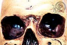 Totenschädel wie echt Originalgröße Abguss Totenkopf Anatomie Skull Deko Gothic