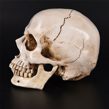 1:1 Human Skull Model Medical Anatomical Teaching Skeleton Halloween Decoration
