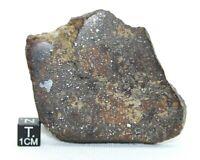 METEORITE NWA 13313 L3-6 BRECCIA CHONDRITE METEORITE OFFICIALLY CLASSIFIED