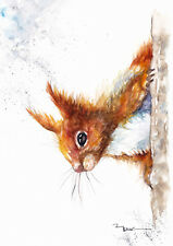 Red Squirrel Print of Original Watercolour Painting by Be Coventry wildlife art