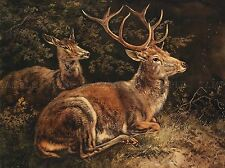 PITTURA ANIMALI gruppo Portrait SCHLEICH RED Deer ART PRINT lah405a
