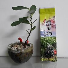 Alishan Early spring tea Jin Xuan Milk Oolong tea 150g *1- cold tea hot soak 4/5